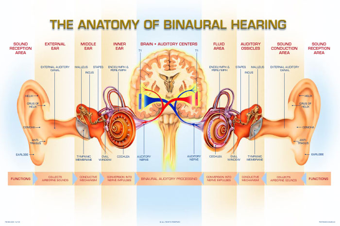 About Hearing Retone Hearing Aids And Accessories